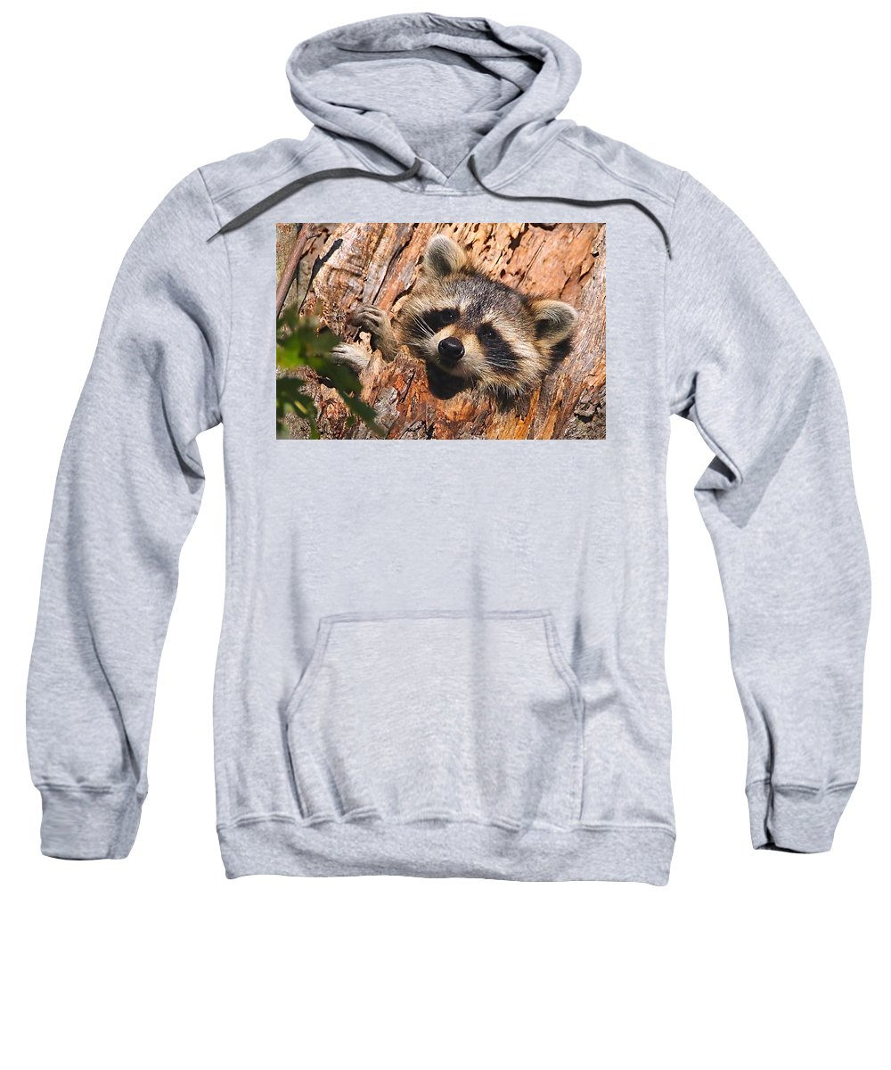 Raccoon Sweatshirt featuring the photograph Baby Raccoon by William Jobes