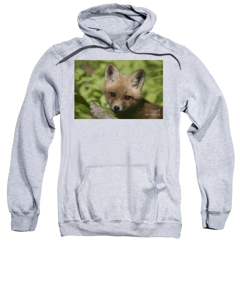 Red Fox Sweatshirt featuring the photograph Baby Red Fox by Robert Pearson