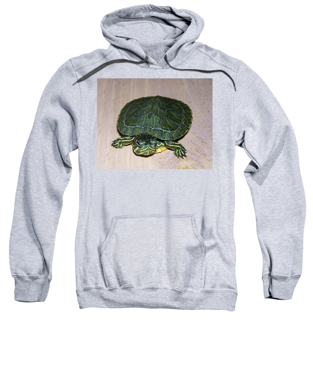 Turtle Sweatshirt featuring the photograph Baby Turtle Looking Up by Sara Raber