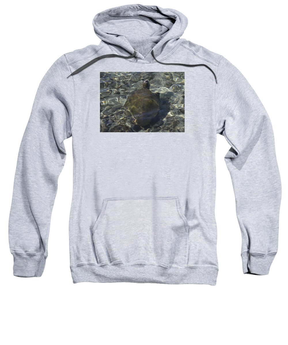 Sea Turtle Sweatshirt featuring the photograph Back Of Turtle by Karen Rose Warner