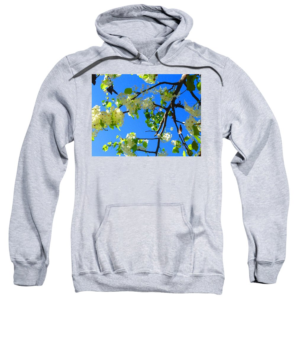 Tree Blossoms Sweatshirt featuring the painting Backlit White Tree Blossoms by Amy Vangsgard