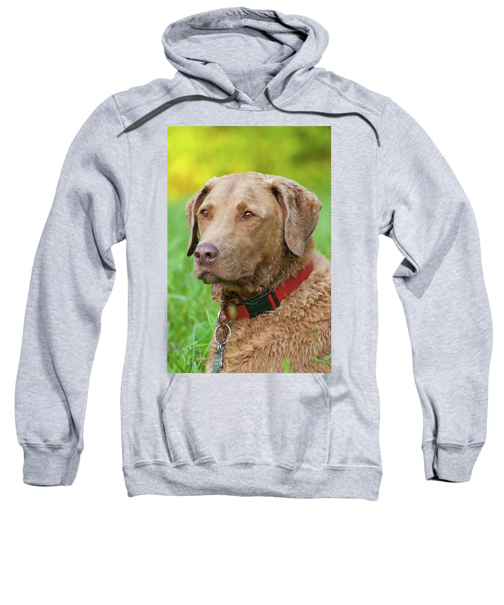 Animals Sweatshirt featuring the photograph Bailee 1149 by Guy Whiteley