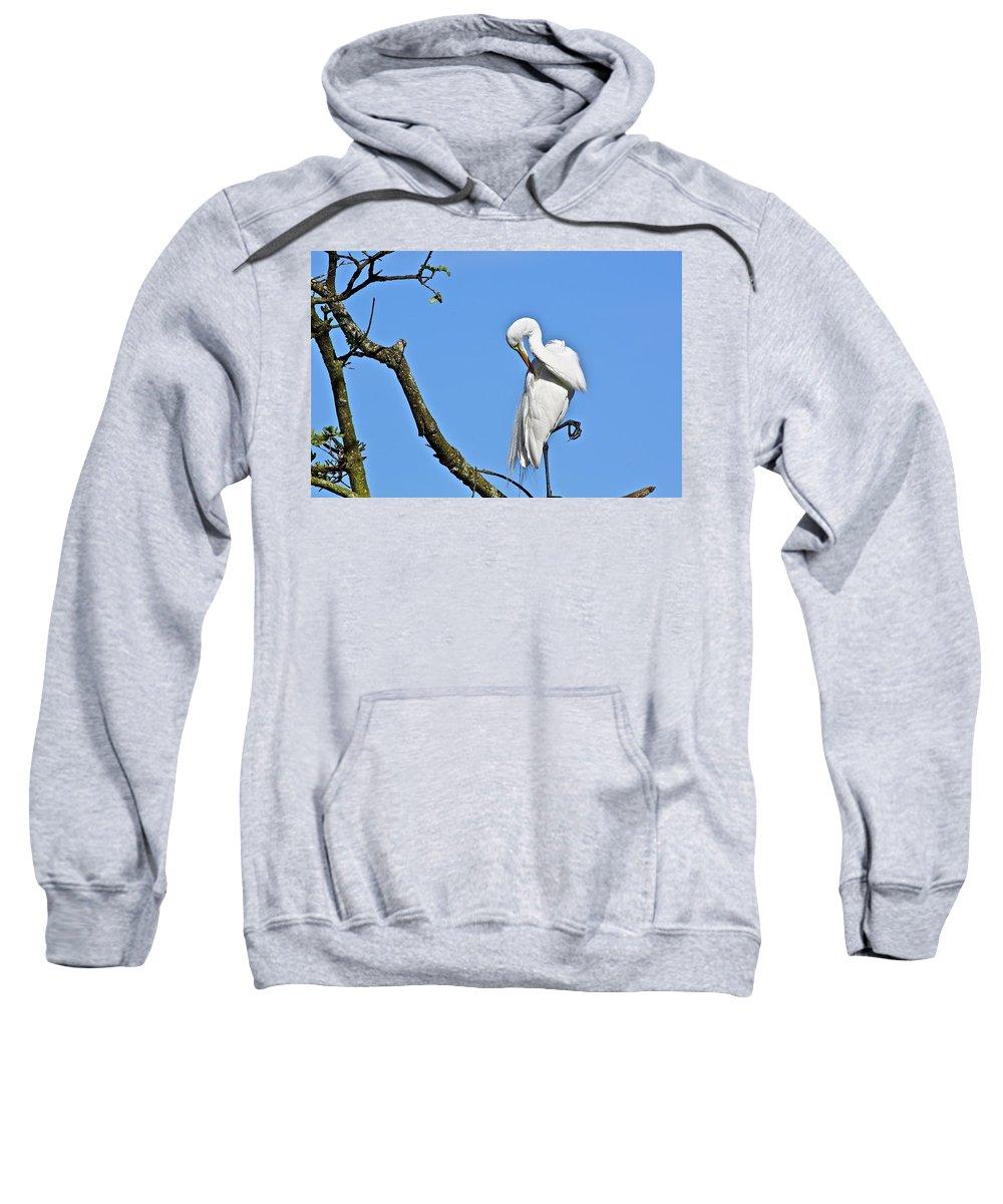 Bird Sweatshirt featuring the photograph Balancing Act by Diana Hatcher