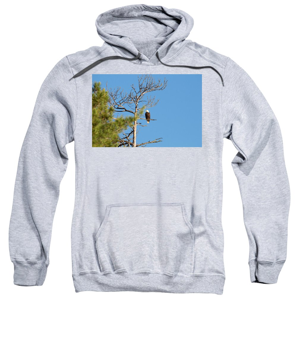 Nature Sweatshirt featuring the photograph Bald And Beautiful by Linda Kerkau