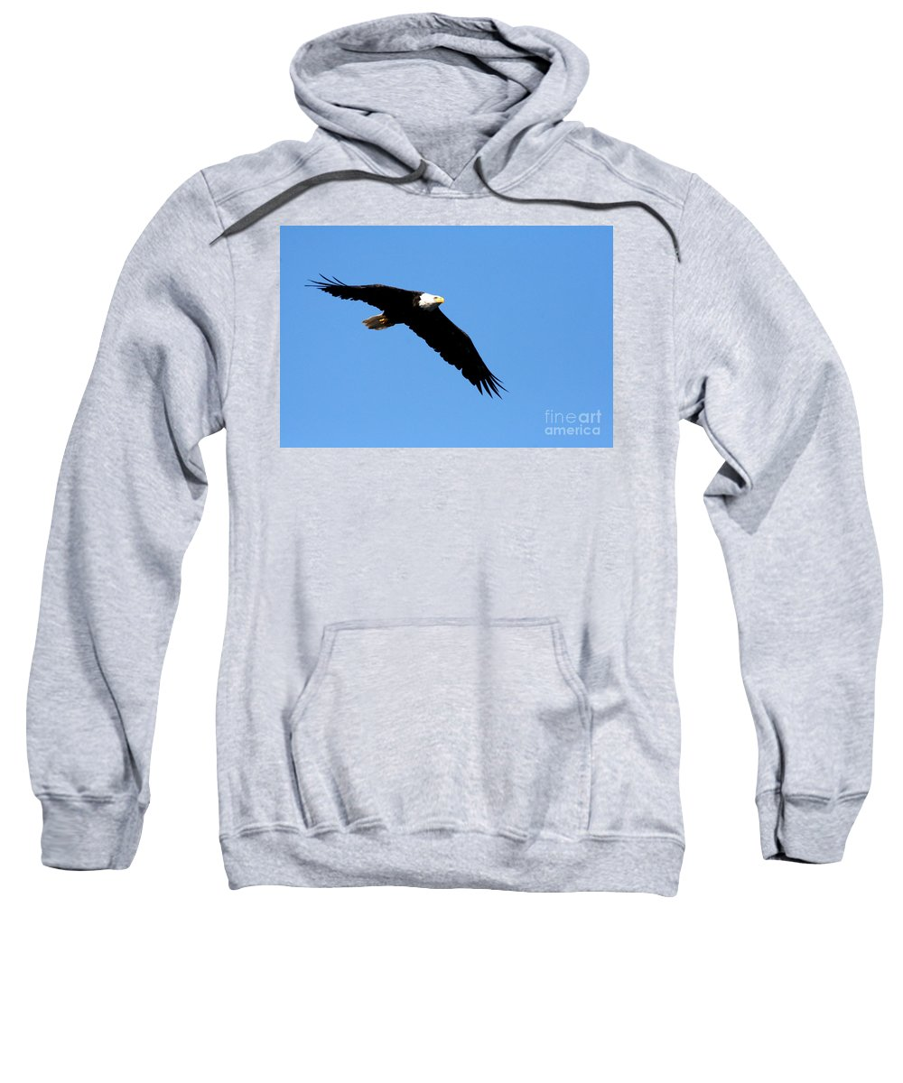 Eagle Sweatshirt featuring the photograph Bald Eagle IIi by Thomas Marchessault