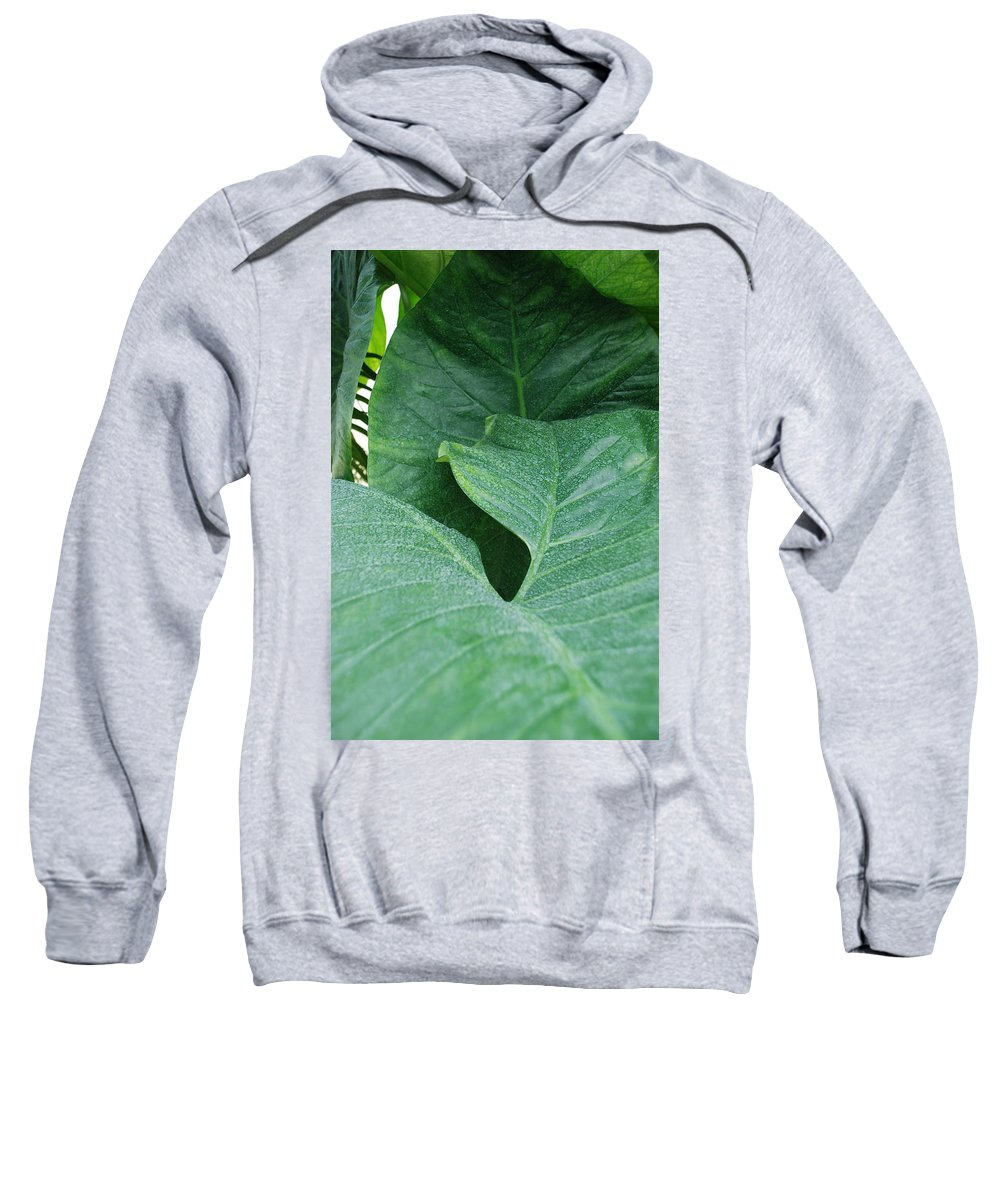 Macro Sweatshirt featuring the photograph Banana Leaves by Rob Hans