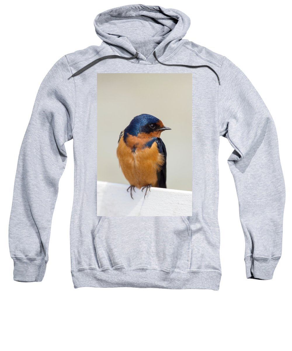 Barn Swallow Sweatshirt featuring the photograph Barn Swallow Perched On A Fence Watching by Jit Lim