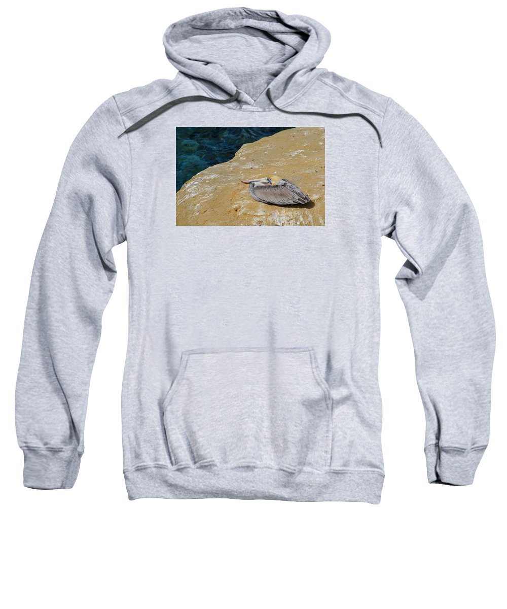 Basking In The Sun Sweatshirt featuring the photograph Basking In The Sun by Susan McMenamin