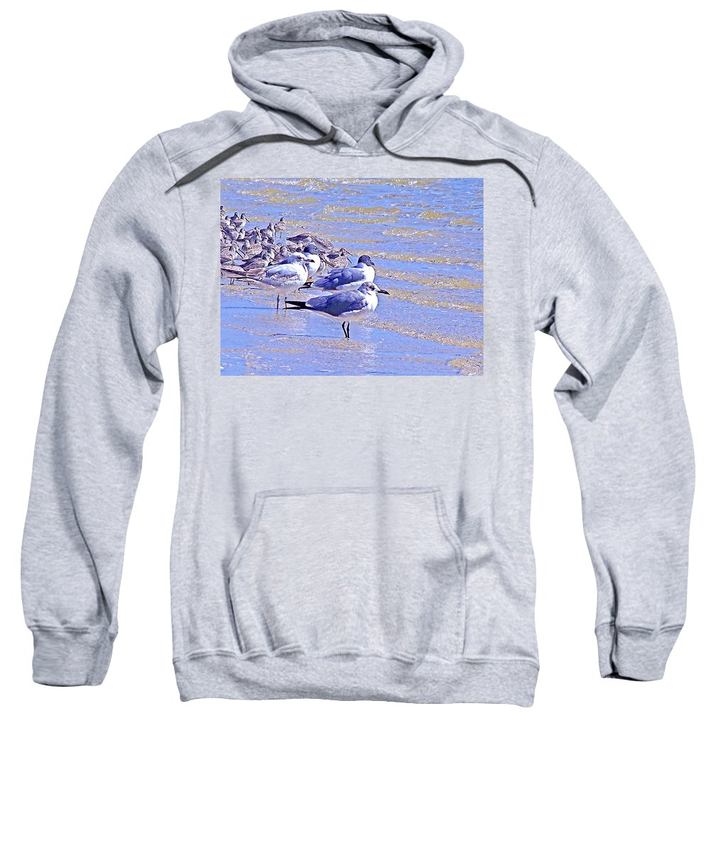 Seagulls Sweatshirt featuring the photograph Basking On The Seashore by Marilyn Holkham