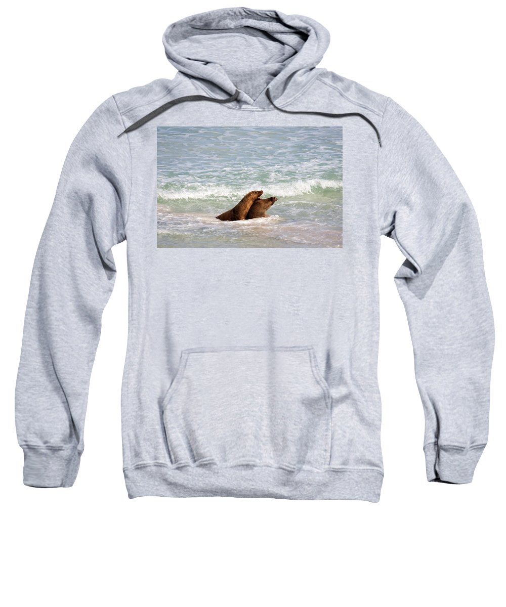 Sea Lion Sweatshirt featuring the photograph Battle For The Beach by Mike Dawson