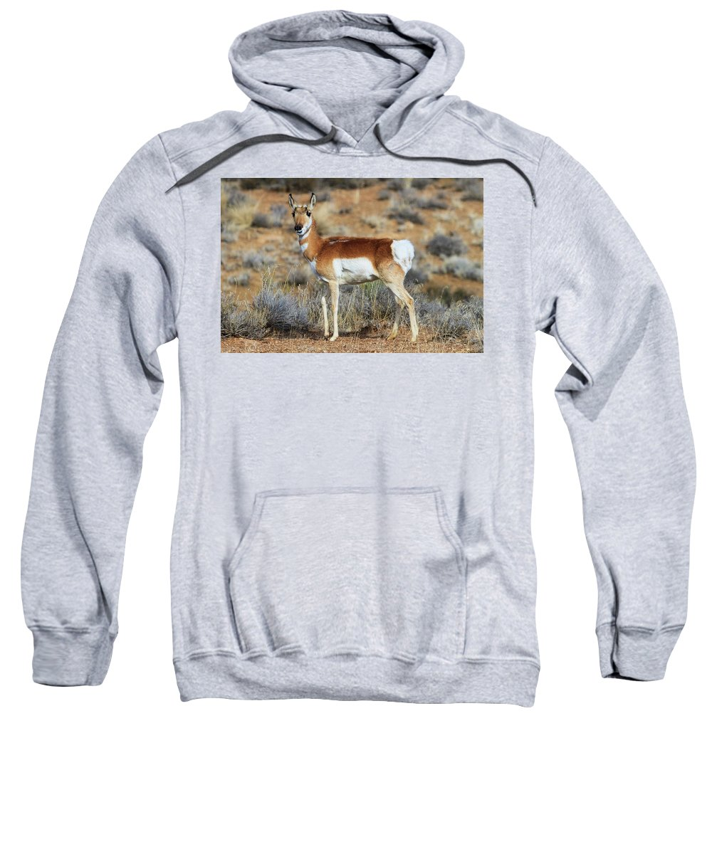 Utah Sweatshirt featuring the photograph Battle Scar  by James Marvin Phelps