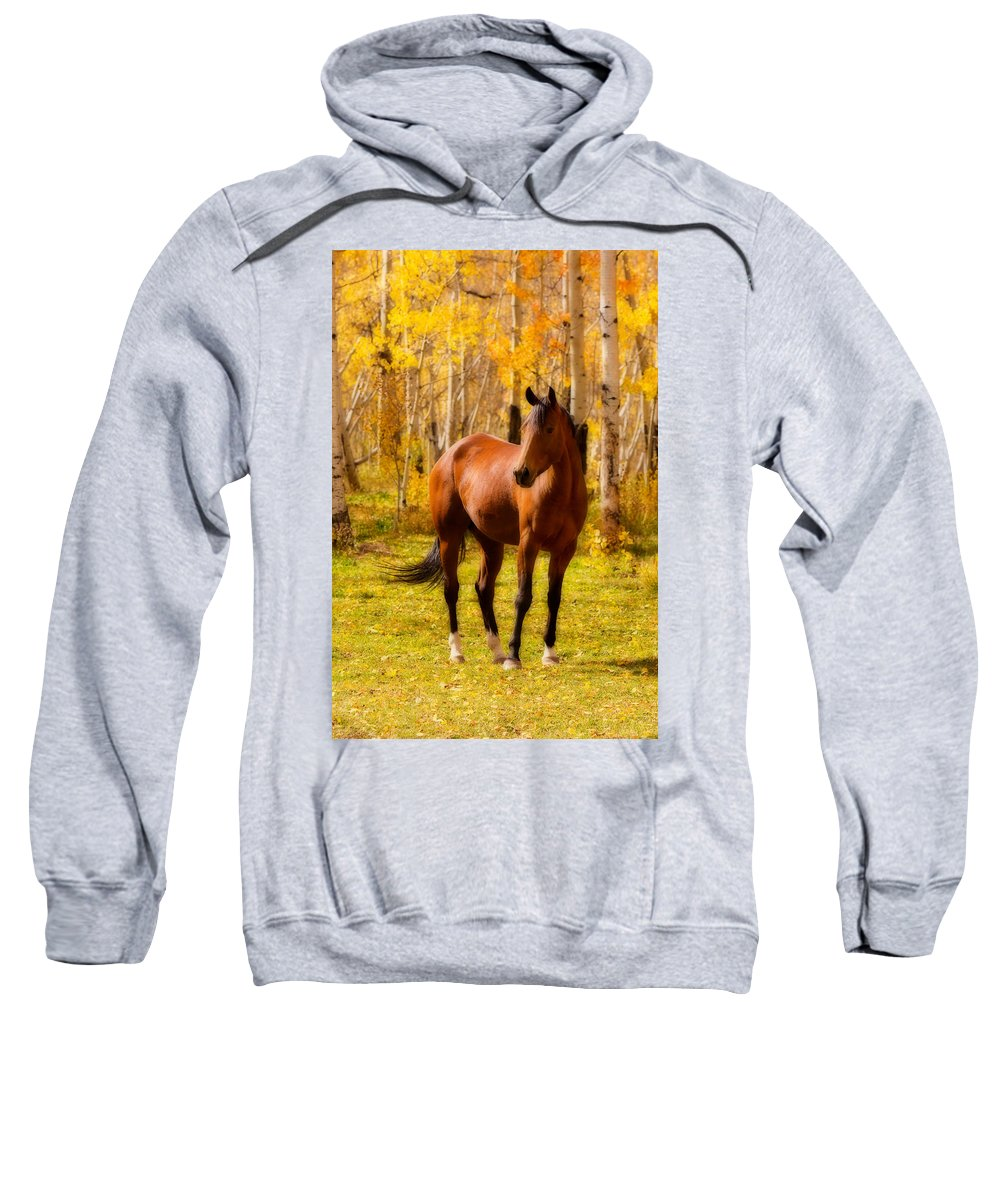 Horse Sweatshirt featuring the photograph Beautiful Autumn Horse by James BO Insogna