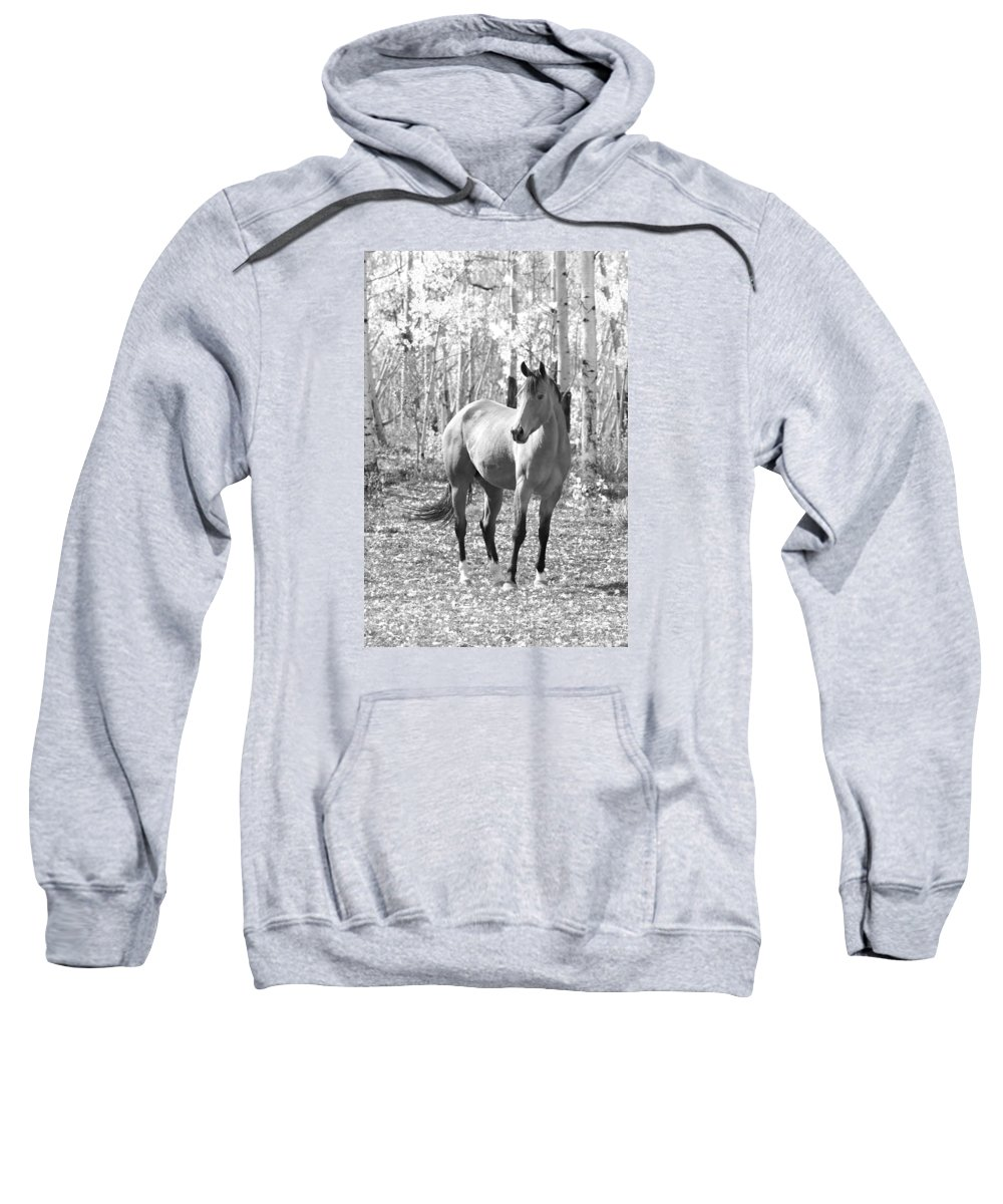 Equine Sweatshirt featuring the photograph Beautiful Horse In Black And White by James BO Insogna