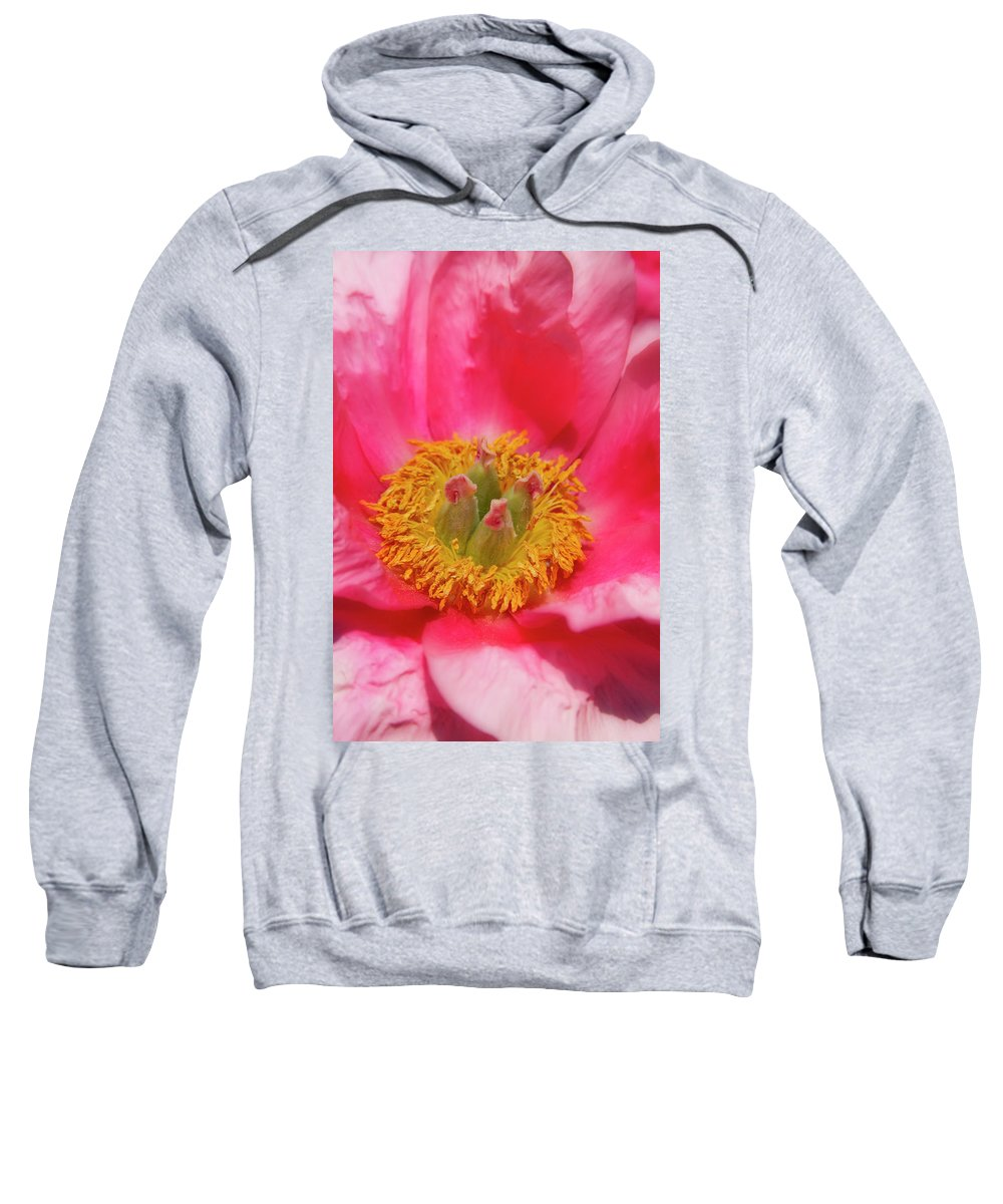Vertical Sweatshirt featuring the photograph Beautiful Pink Peony Flower Vertical by James BO Insogna