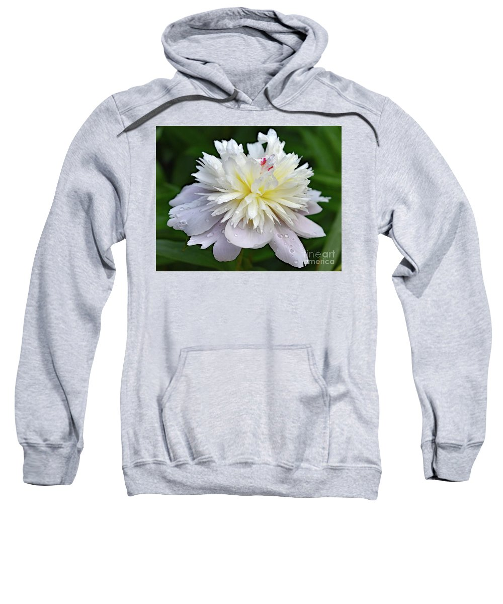 Festiva Maxima Double White Peony Sweatshirt featuring the photograph Beauty Can't Be Dampened - Festiva Maxima Double Peony by Cindy Treger