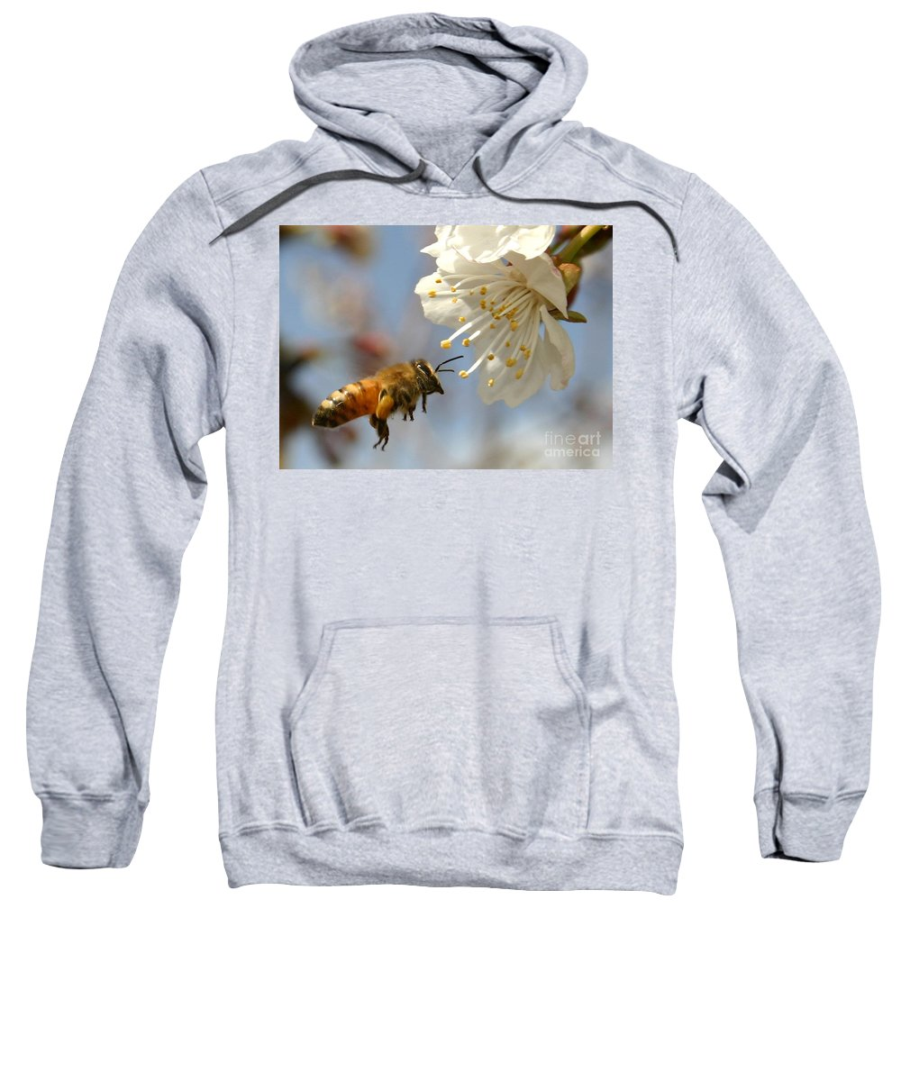 Honey Sweatshirt featuring the photograph Bee And A Blossom by Danny Yanai