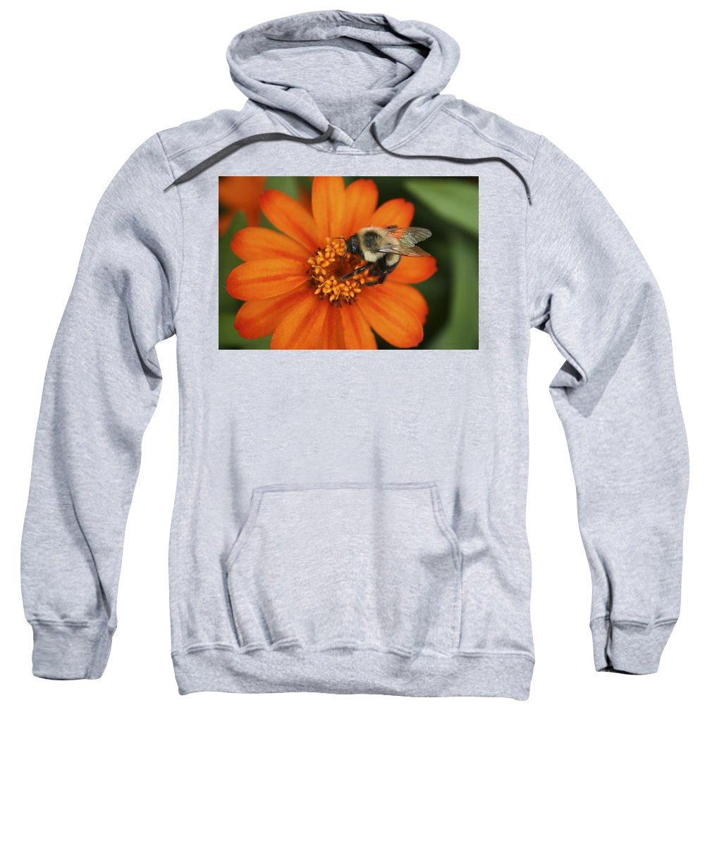 Bee Sweatshirt featuring the photograph Bee On Aster by Margie Wildblood