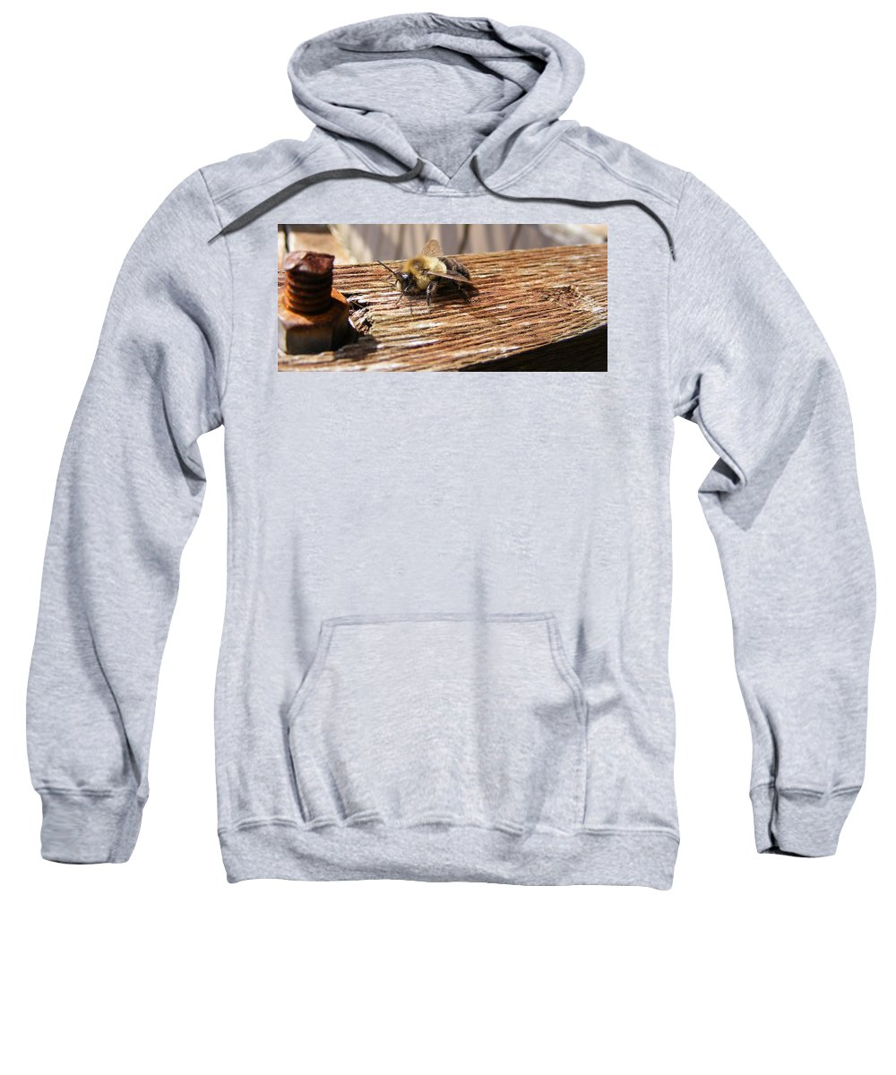 Bee Sweatshirt featuring the photograph Bee-u-tiful by Ed Smith