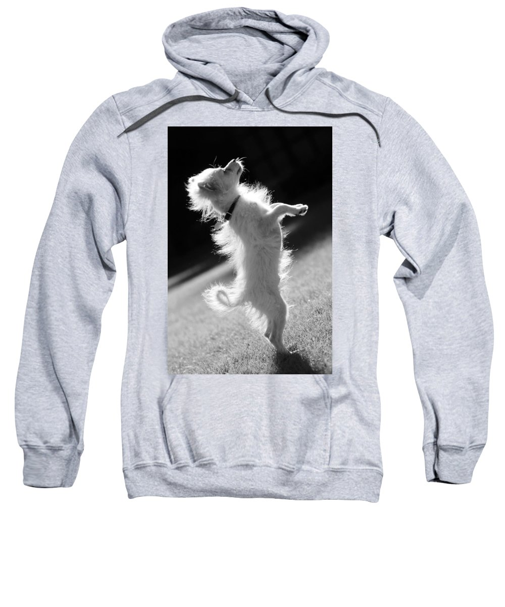 Black And White Sweatshirt featuring the photograph Begging Dog Black And White by Jill Reger