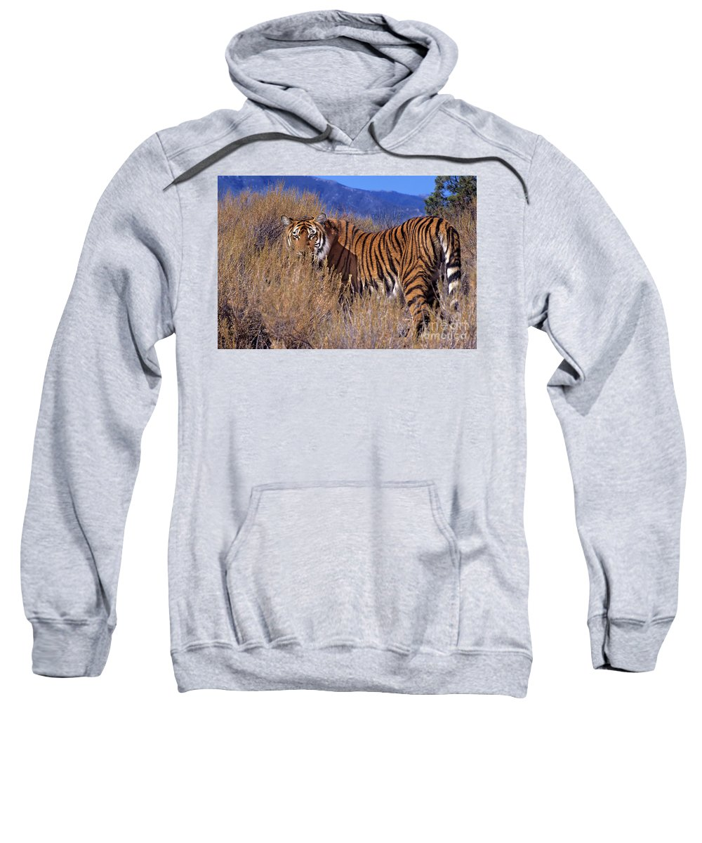 Bengal Tiger Sweatshirt featuring the photograph Bengal Tiger Endangered Species Wildlife Rescue by Dave Welling