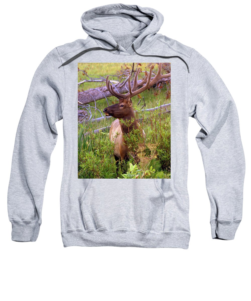 Bull Elk Sweatshirt featuring the photograph Big Bull by Marty Koch