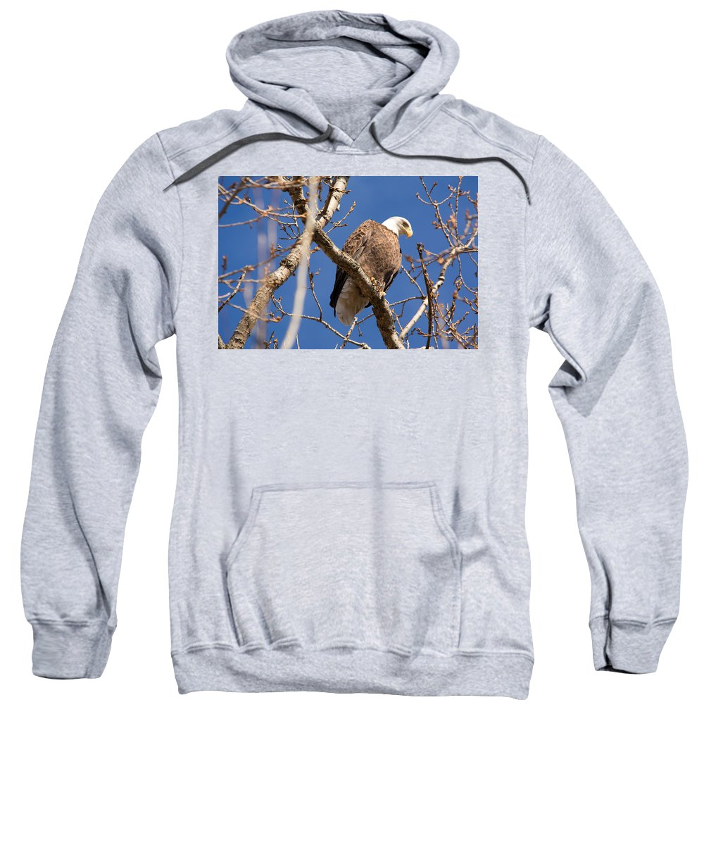 Bald Eagle Sweatshirt featuring the photograph Big Eagle by Linda Kerkau