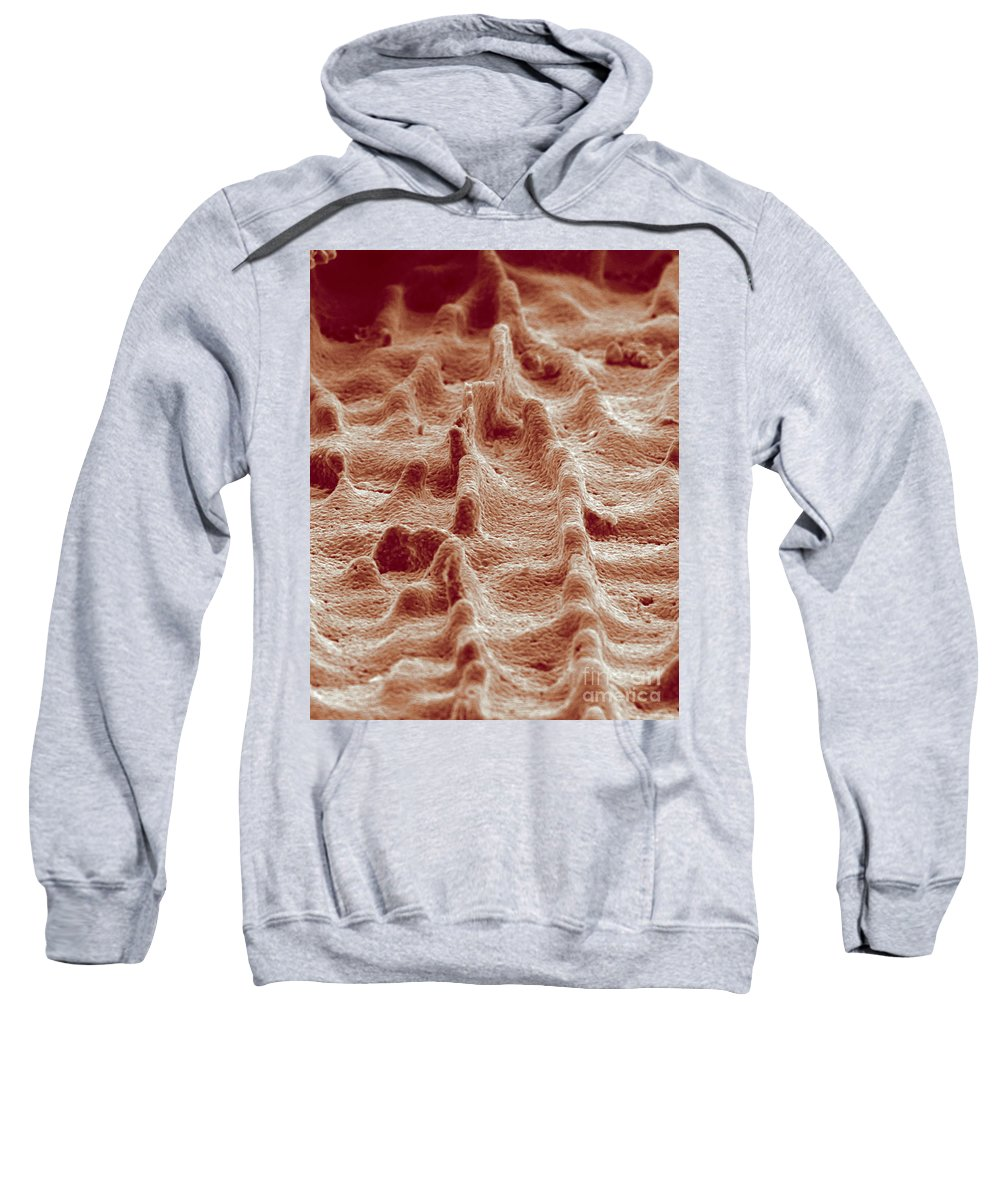 Science Sweatshirt featuring the photograph Biomimicry, Ceramic Mimics Mother by Science Source
