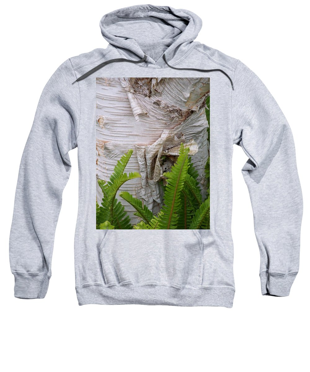 Tree Sweatshirt featuring the photograph Birch Fern by Gale Cochran-Smith