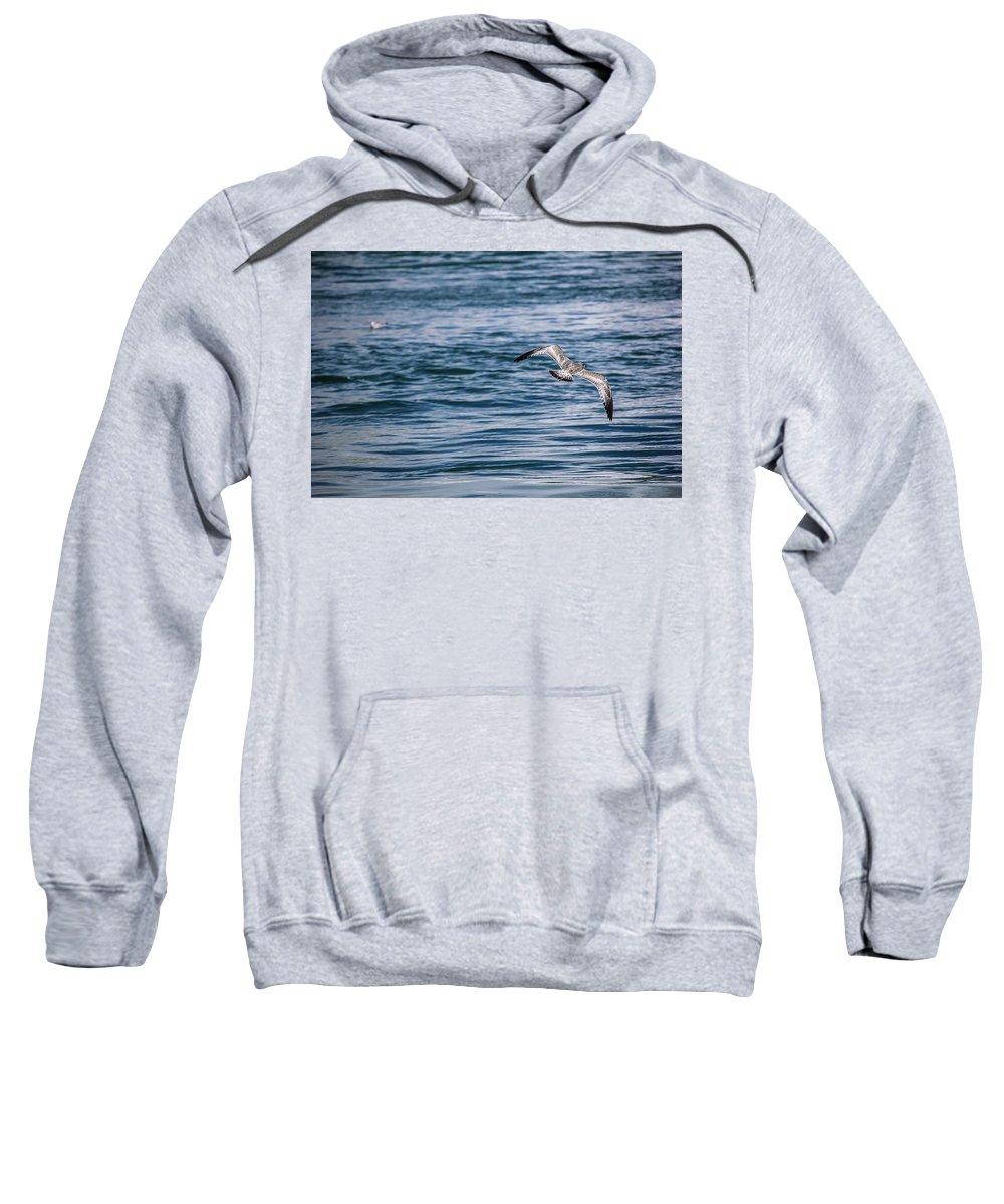 Bird Sweatshirt featuring the photograph Bird In Flight Over Water by Maxwell Dziku
