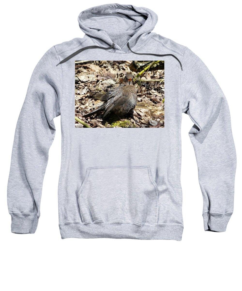 Bird Sweatshirt featuring the photograph Bird In Hiding by Valerie Ornstein