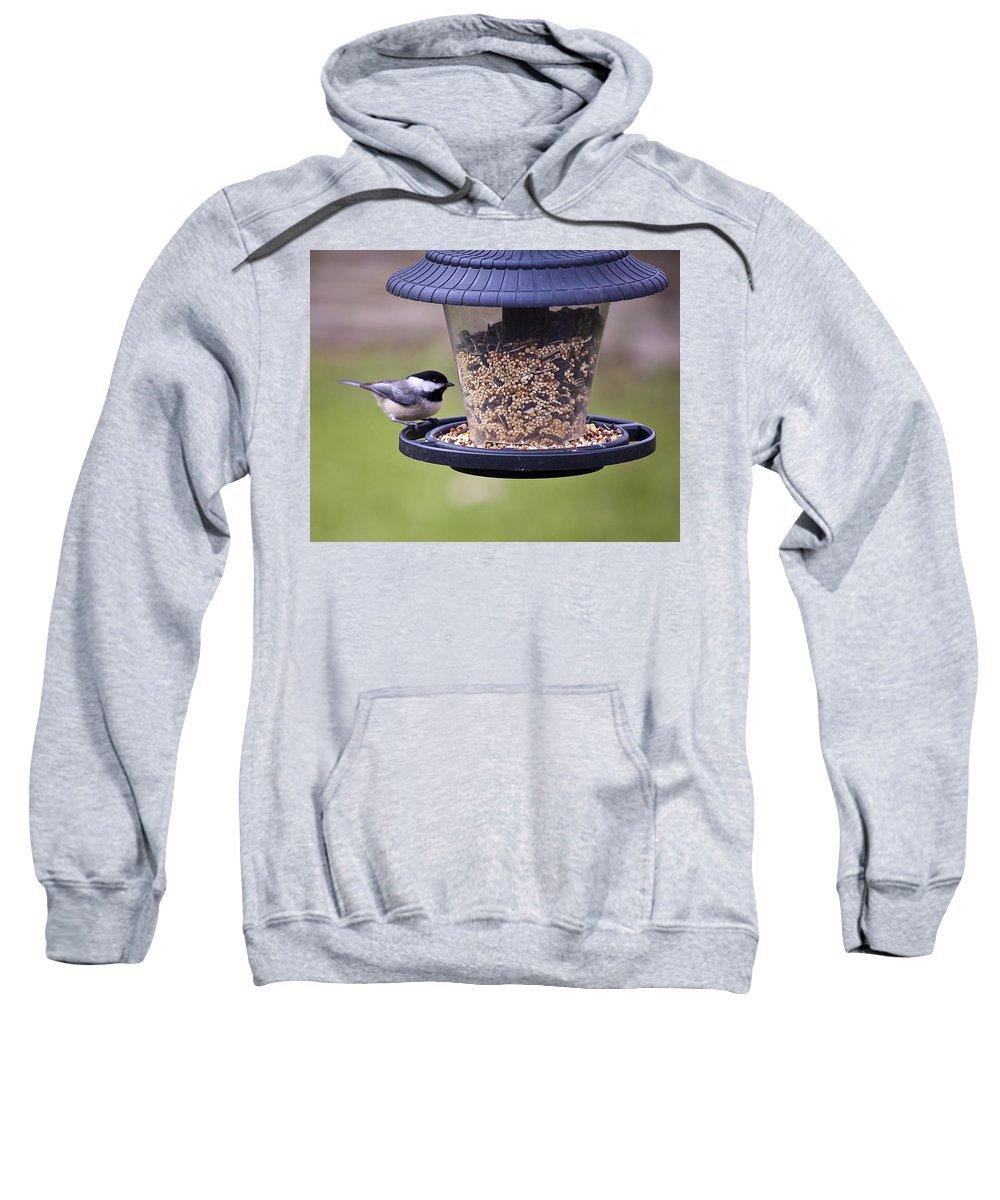 Backyard Sweatshirt featuring the photograph Bird On Feeder by Gary Adkins