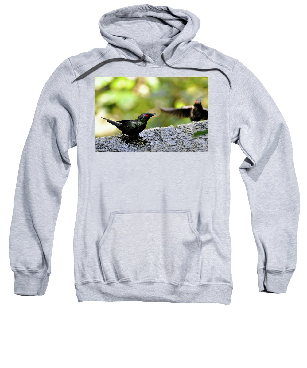Black Bird Blackbird Water Shallow Depth Of Field Nature Natural Green Sweatshirt featuring the photograph Birdy by Marni Moore