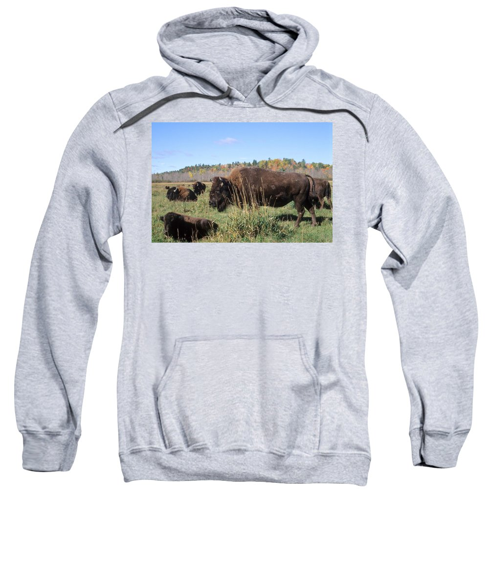 Wildlife Sweatshirt featuring the photograph Bison Home On The Range by Larry Allan