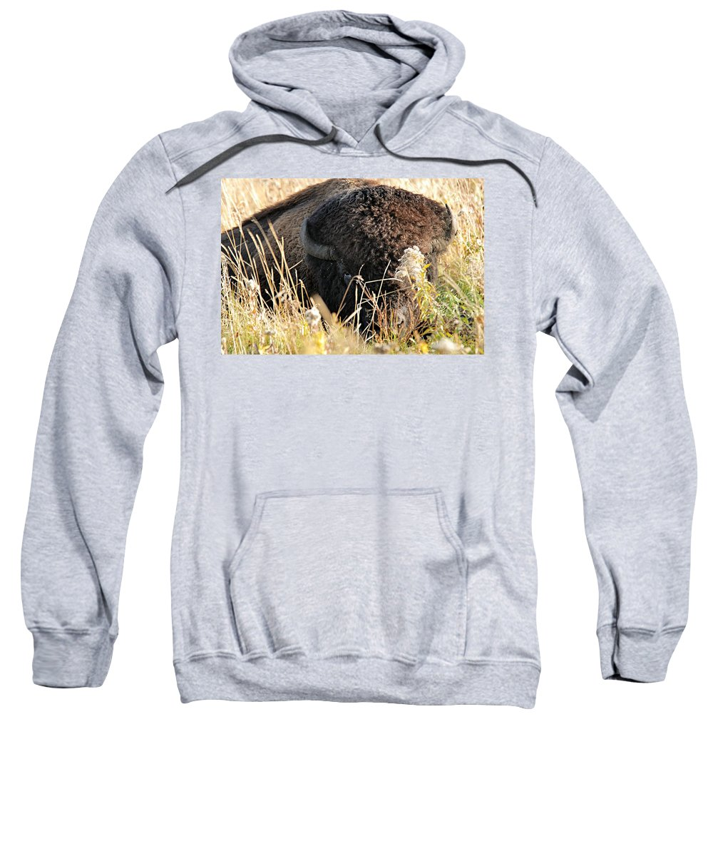 Riding Mountain National Park Sweatshirt featuring the photograph Bison In Hiding by Larry Ricker