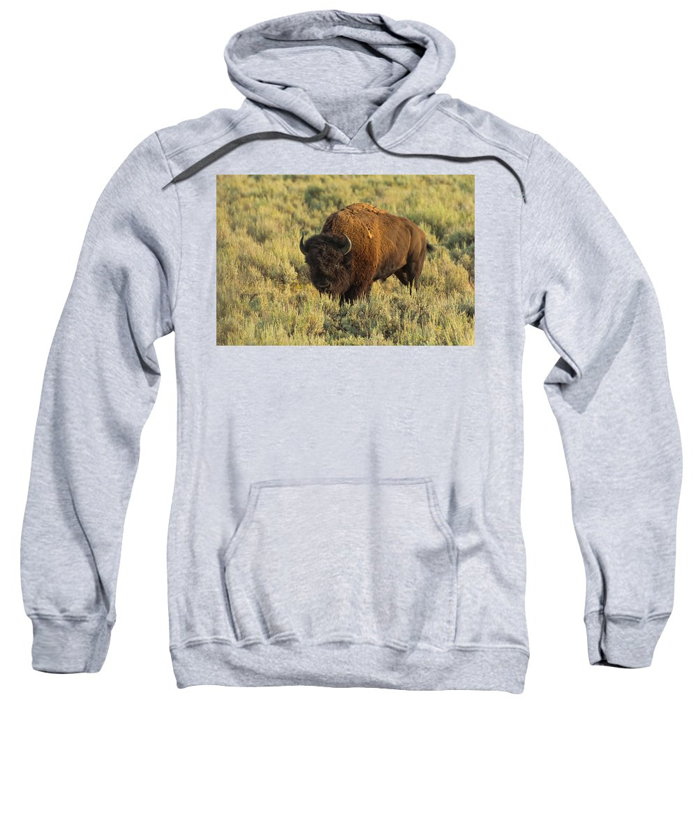 American Bison Sweatshirt featuring the photograph Bison by Sebastian Musial