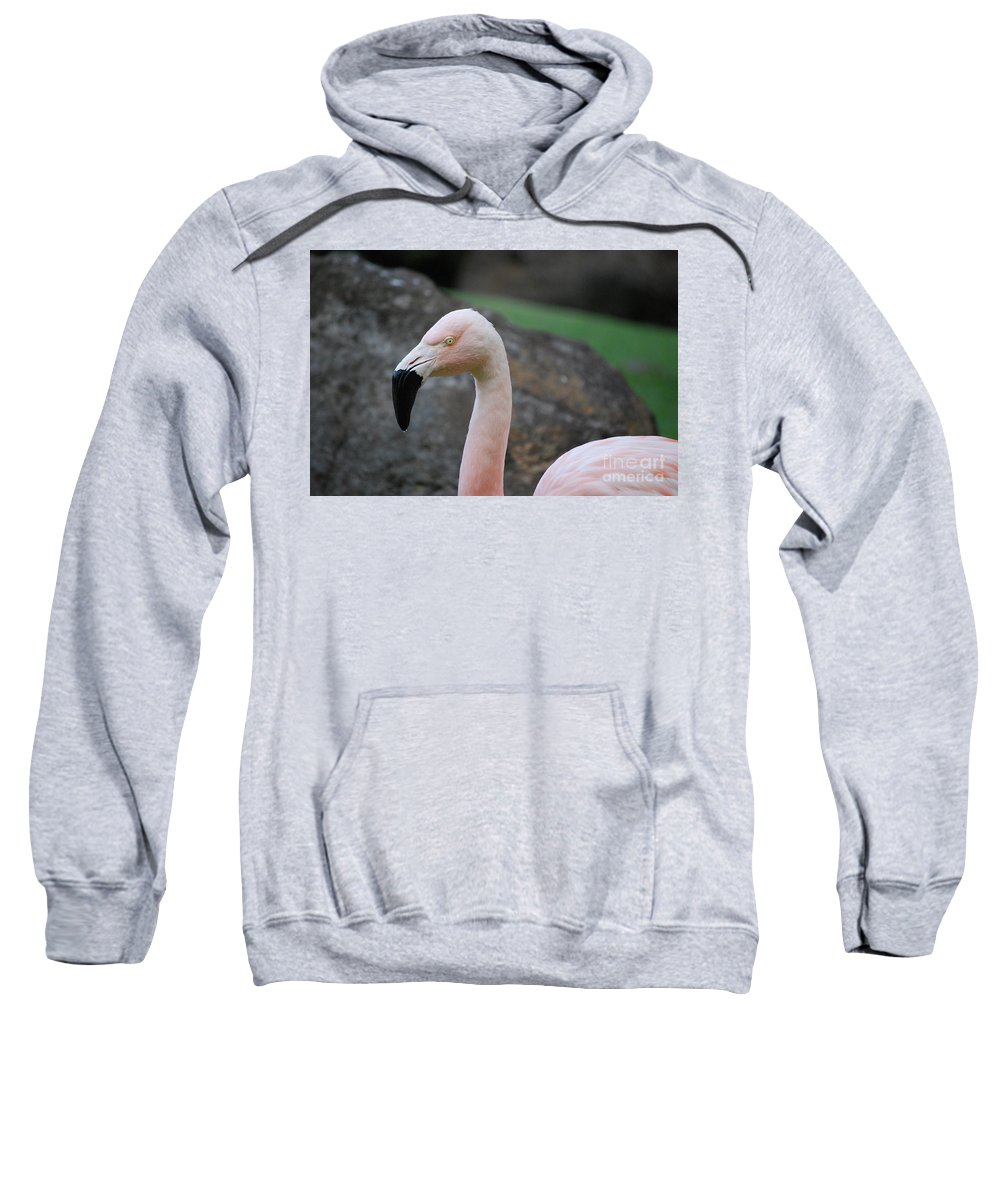 Flamingo Sweatshirt featuring the photograph Black Beak On A Chilean Flamingo by DejaVu Designs