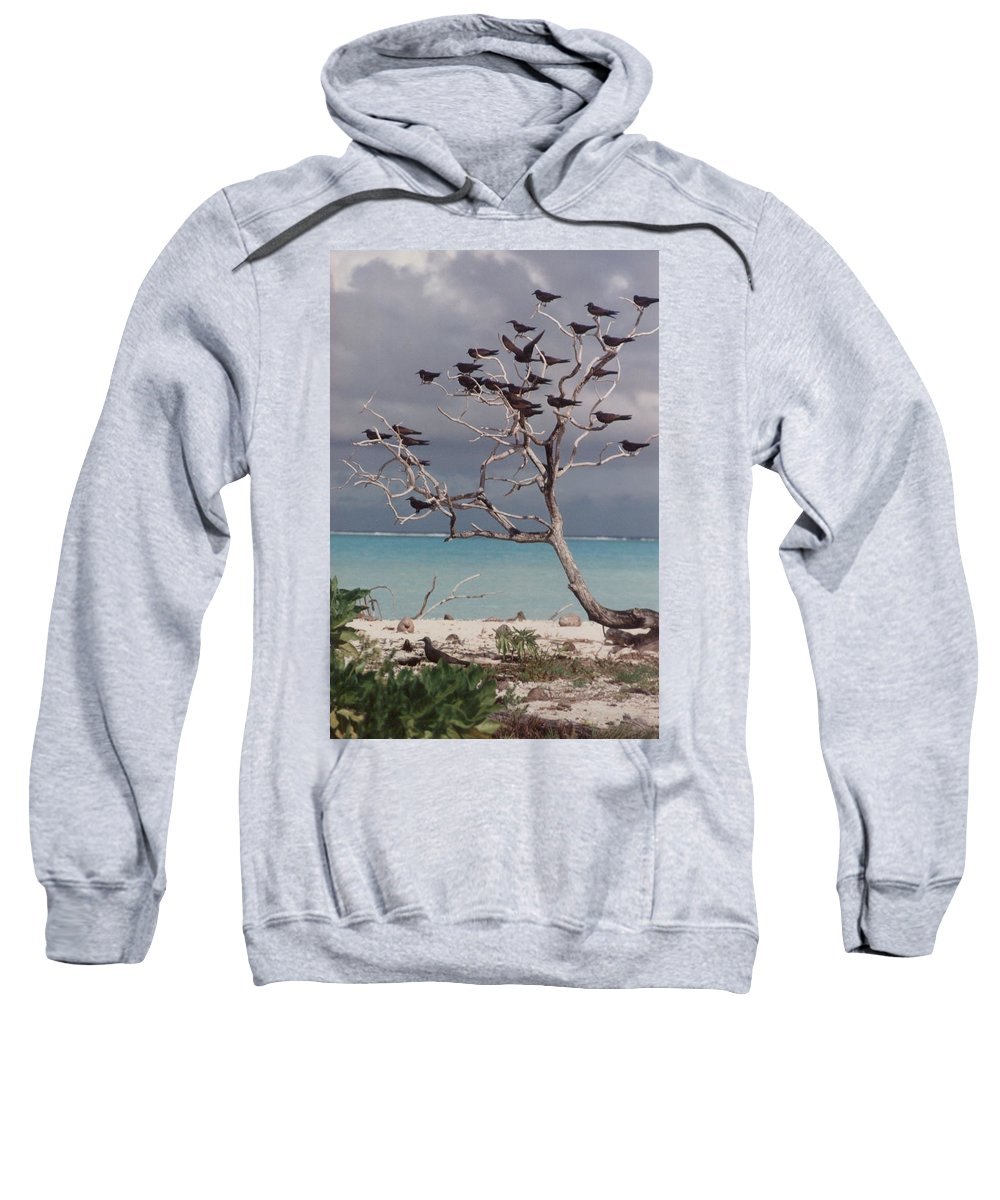 Charity Sweatshirt featuring the photograph Black Birds by Mary-Lee Sanders