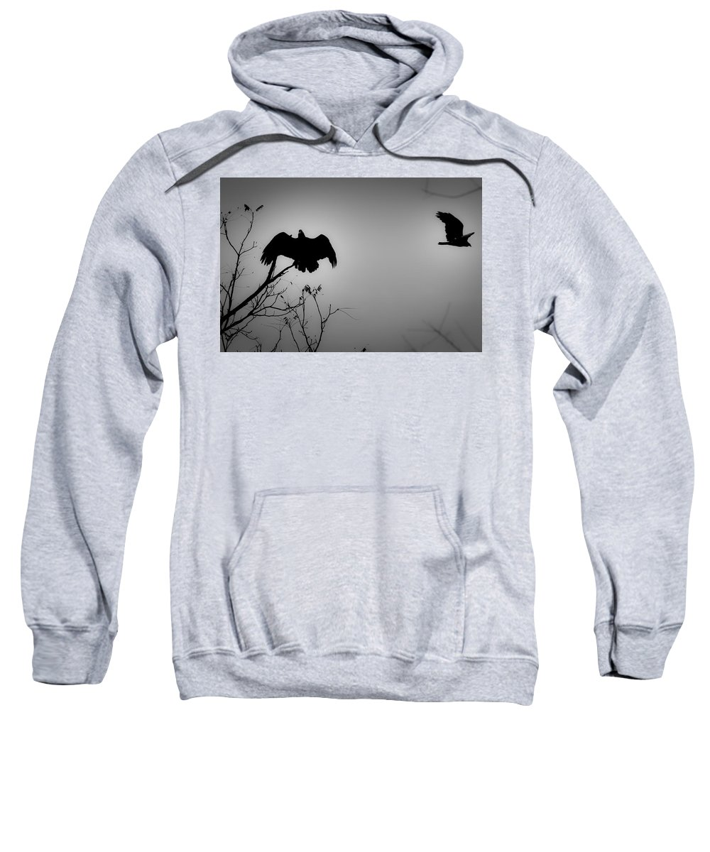 Black Sweatshirt featuring the photograph Black Buzzard 2 by Teresa Mucha