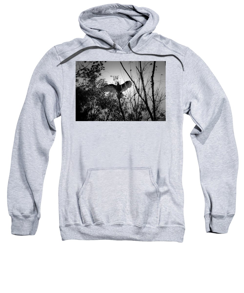 Black Sweatshirt featuring the photograph Black Buzzard 4 by Teresa Mucha