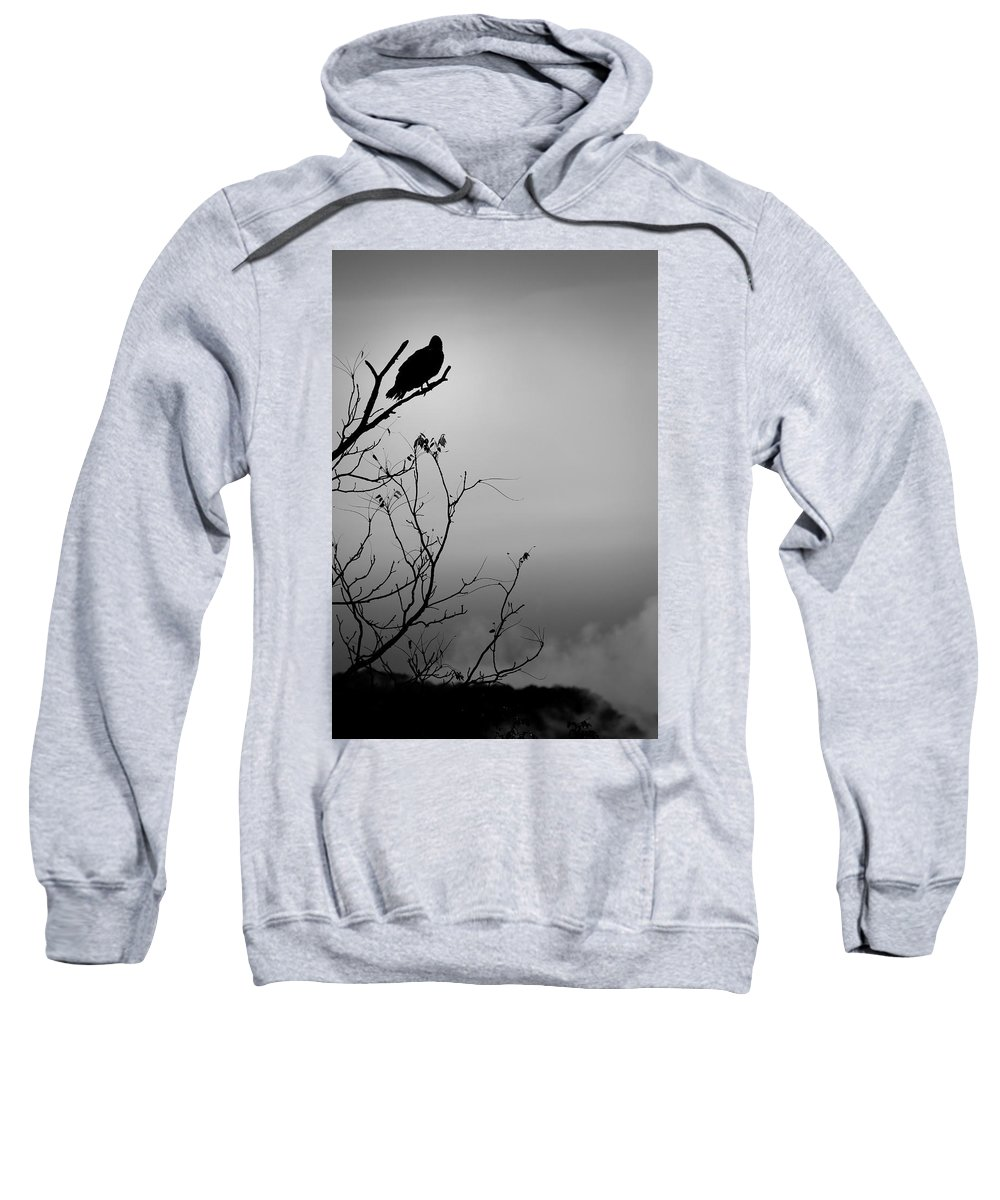 Black Sweatshirt featuring the photograph Black Buzzard 7 by Teresa Mucha