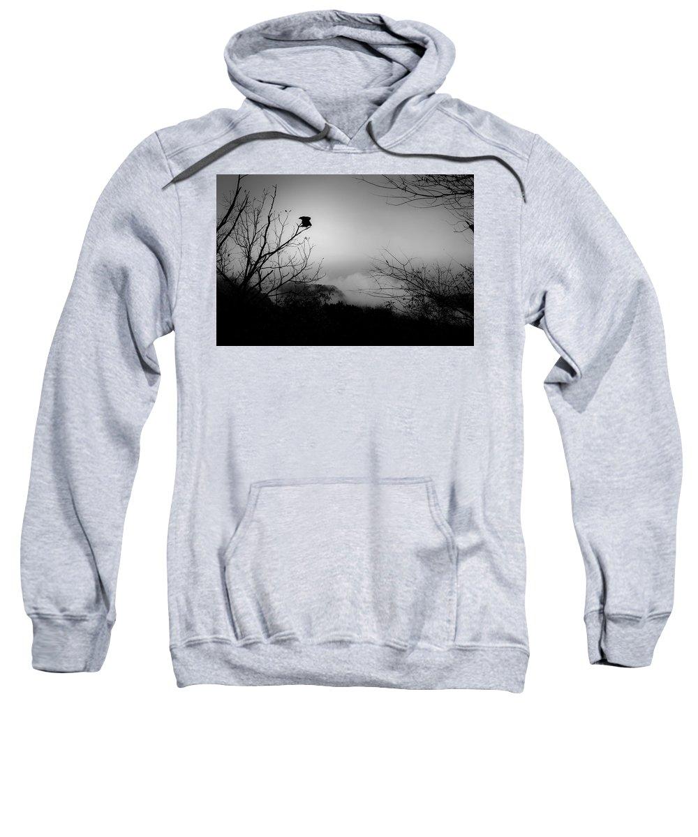 Black Sweatshirt featuring the photograph Black Buzzard 8 by Teresa Mucha