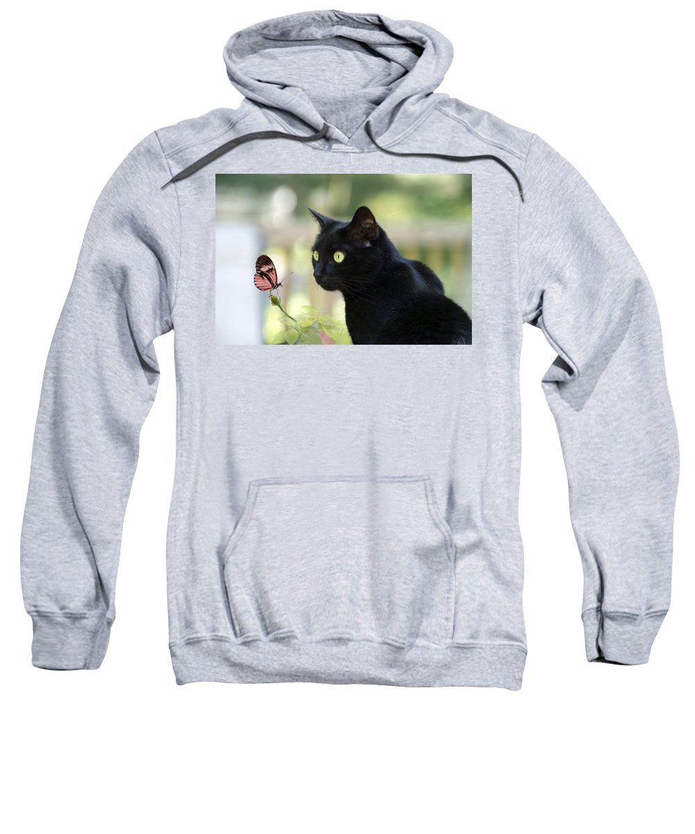 Black Cat Sweatshirt featuring the photograph Black Cat And Butterfly by Janet Argenta