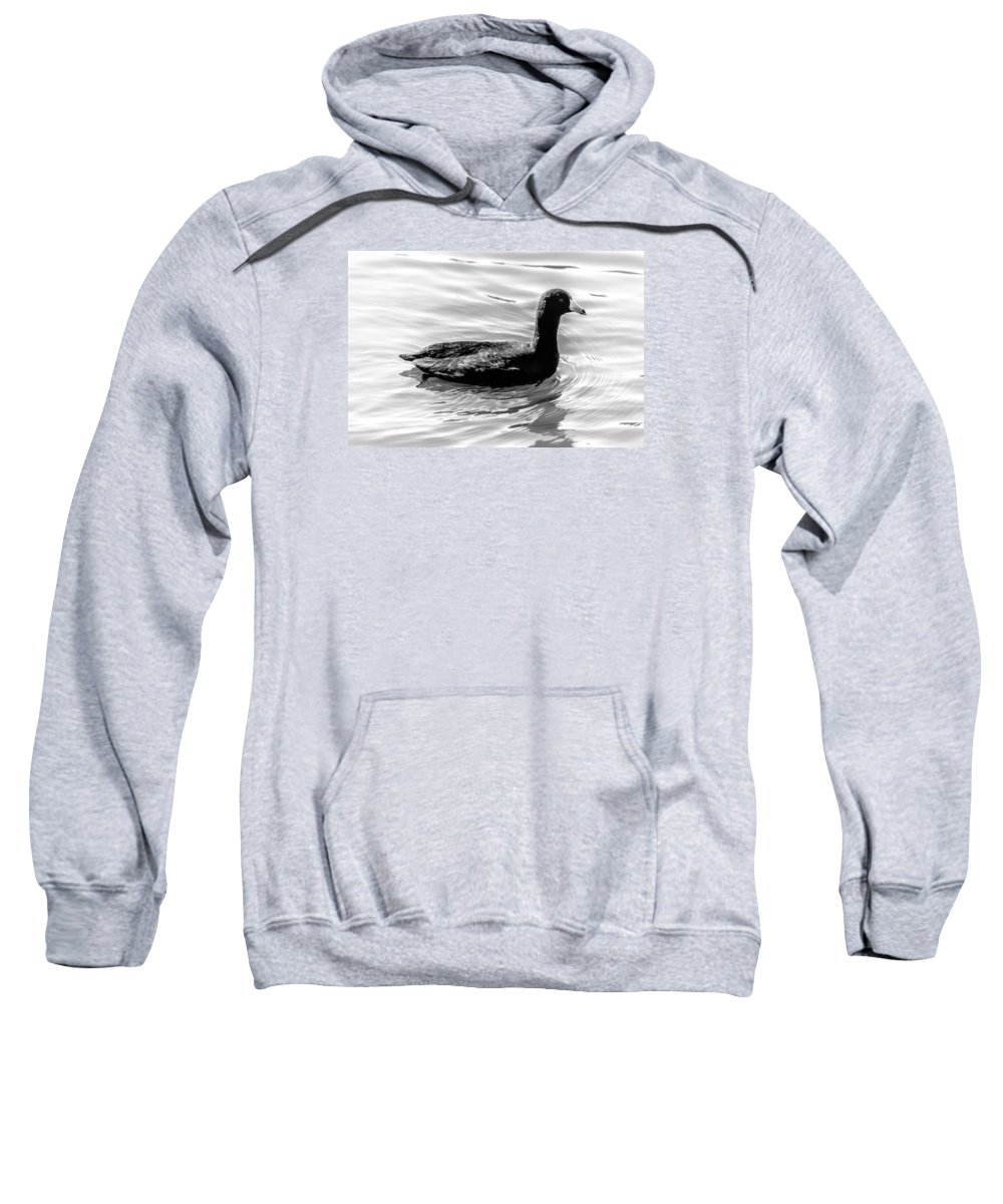 Duck Sweatshirt featuring the photograph Black Duck by Leticia Latocki