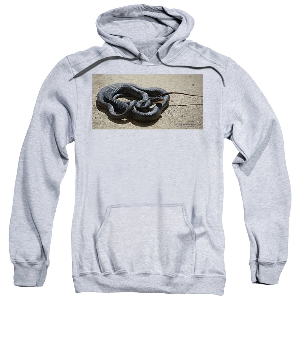 Snake Sweatshirt featuring the digital art Black Racer by DigiArt Diaries by Vicky B Fuller