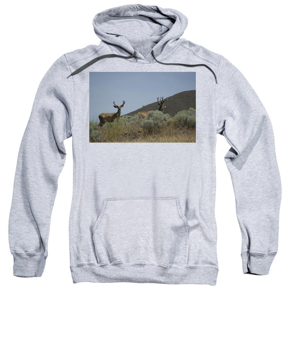 Buck Sweatshirt featuring the photograph Blacktail Deer 2 by Sara Stevenson