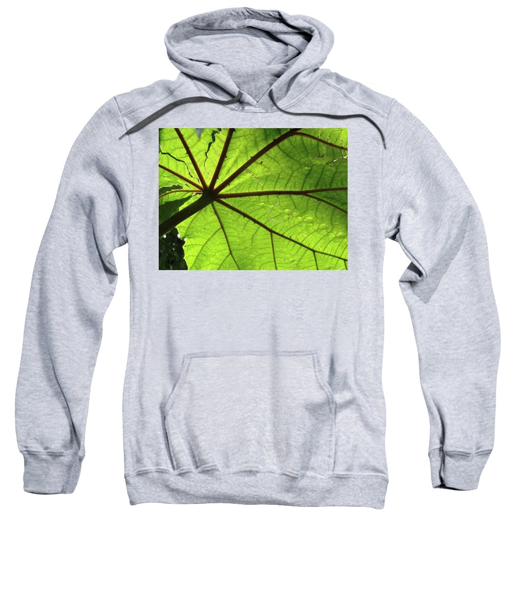 Leaves Sweatshirt featuring the photograph Blood Red Feeder by Trish Hale