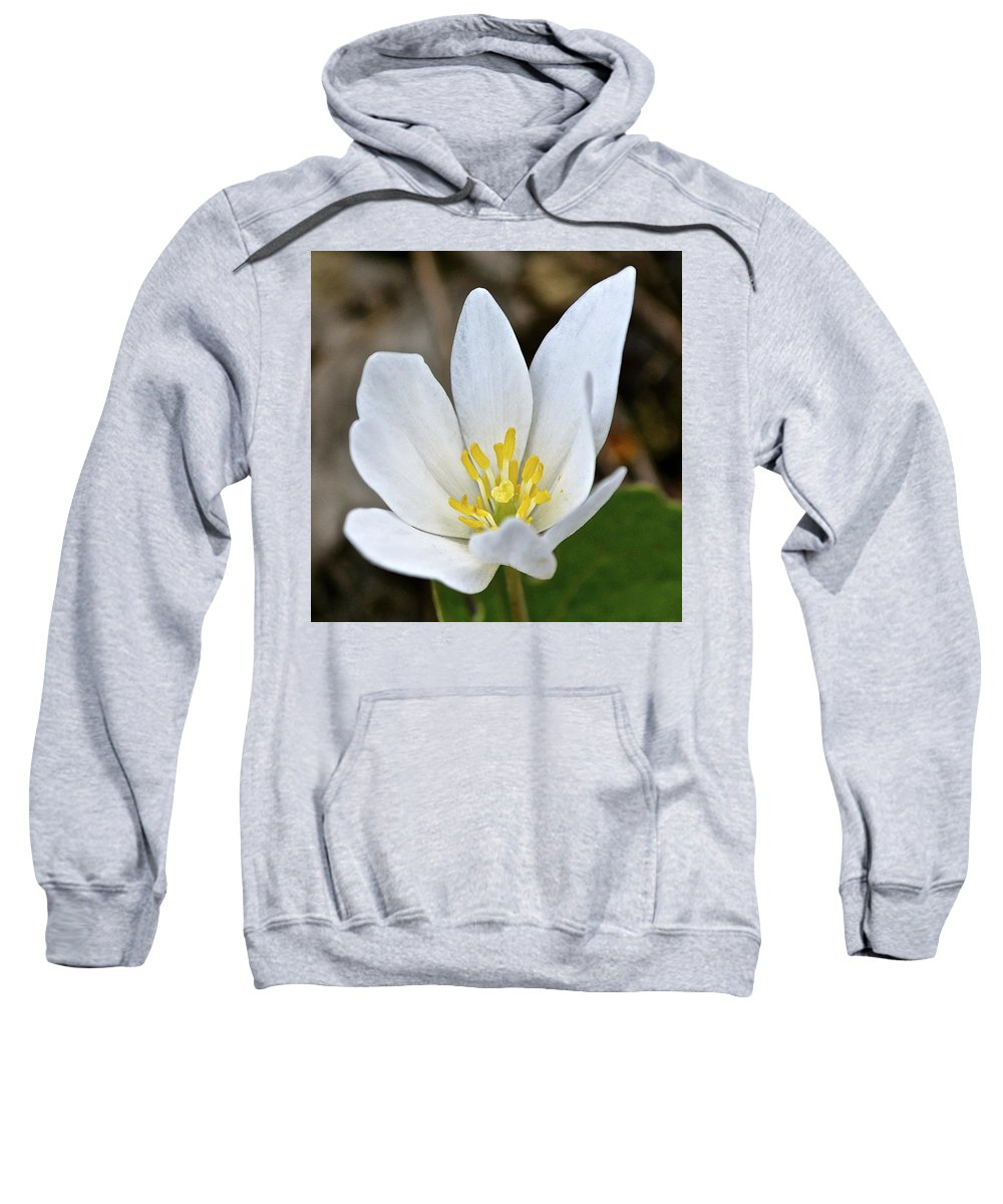 Wildflowers Sweatshirt featuring the photograph Bloodroot 3 by Tana Reiff