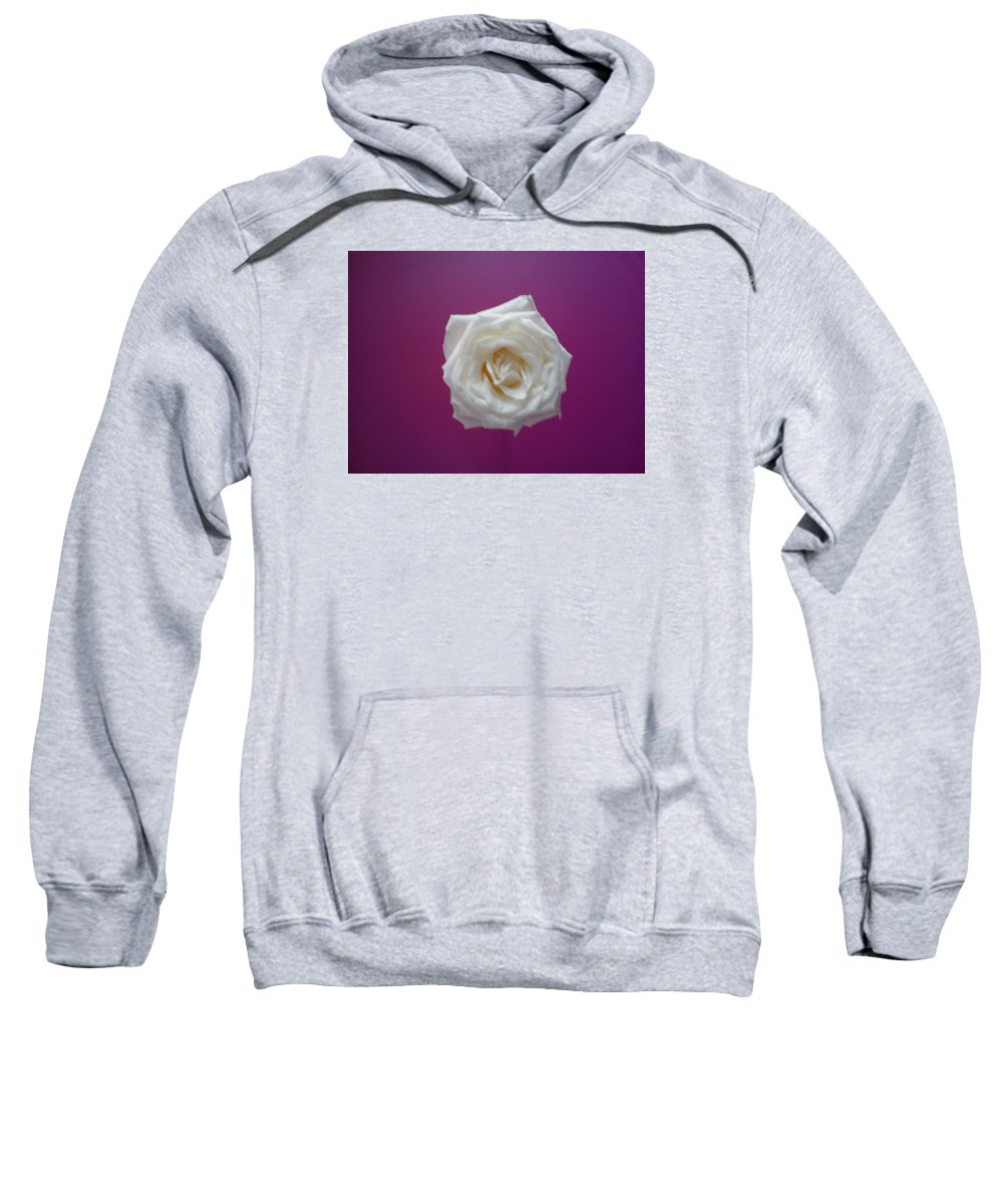Rose On Purple Background Sweatshirt featuring the photograph Blooming Rose by Angela Husband