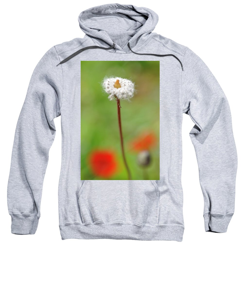 Blossom Sweatshirt featuring the photograph Blossom At Amatzia Forest -1 by Dubi Roman
