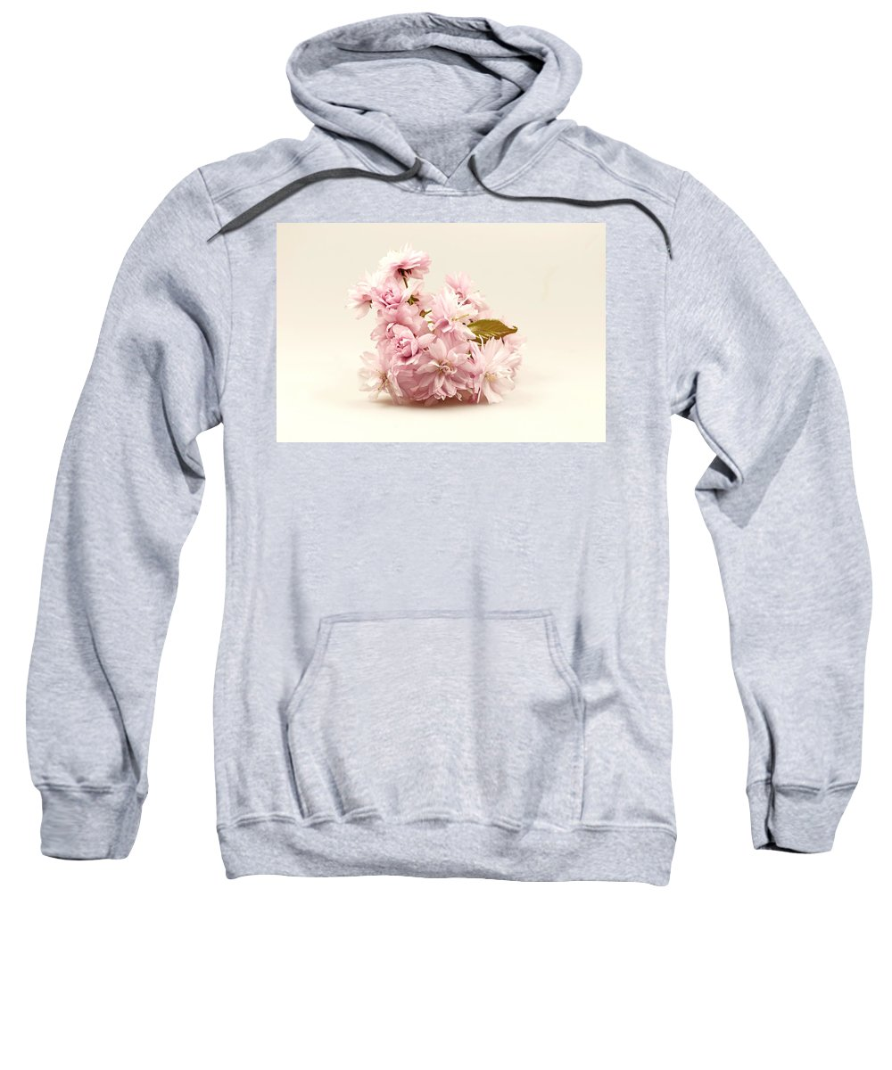 Branch Sweatshirt featuring the photograph Blossoming Cherry Twig by Jaroslav Frank